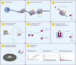 The ChIP-seq kit uses solid state technology in parallel with high-throughput sequencing to deliver a streamlined ChIP-seq protocol from small cell numbers and low chromatin concentrations to investigate the epigenetic landscape.